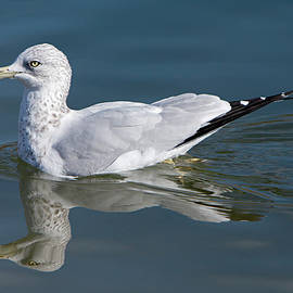 Alone on the Pond by David Millenheft