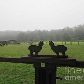Alpaca Farm In Vockerode by Chani Demuijlder