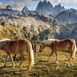 Alps Horses by Mah FineArt