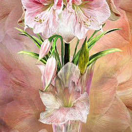 Carol Cavalaris - Amaryllis In Amaryllis Vase