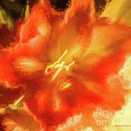 Amaryllis Orange Yellow Red by Mona Stut