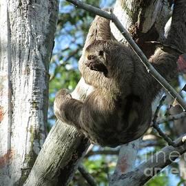 Cindy  Riley - Amazon Sloth