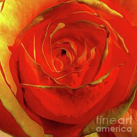 Amber Rose by Catchavista