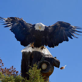 Richard Bryce and Family - American Bald Eagle Cleared for Landing