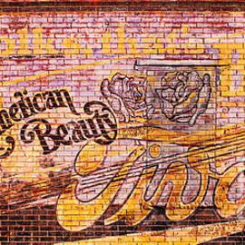 Steven Parker - American Beauty