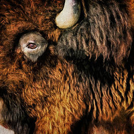 American Bison by Anna Louise
