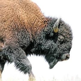 Jennie Marie Schell - American Bison