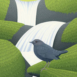 American Dipper - Nathan Marcy