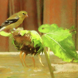 American Goldfinch On Withering Sunflower by Ola Allen