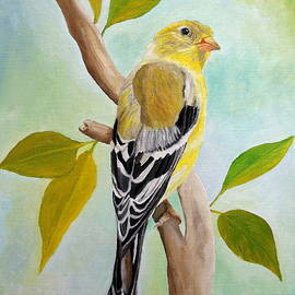 Pretty American Goldfinch by Angeles M Pomata