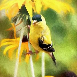American Goldfinch by Tina LeCour