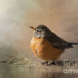 American Robin Morning Light by Sharon McConnell