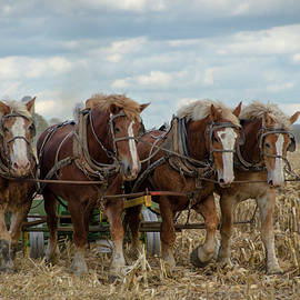 Amish Fall Harvest by Eleanor Bortnick