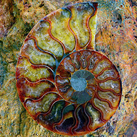 Paul W Faust - Impressions of Light - Ammonite Fossil - 8315