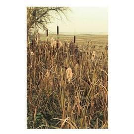 *among The Reeds  #landscape