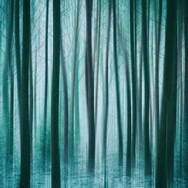 David Lichtneker - Among the Trees