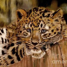 Lance Sheridan-Peel - Amur Leopard Cub