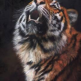 Amur Tiger Looking Up - David Stribbling