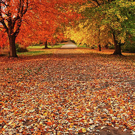 Debbie Oppermann - An Autumn Walk
