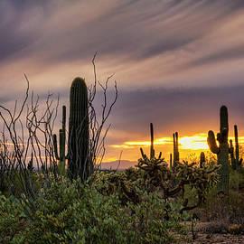 An Enchanted Sonoran Evening  by Saija Lehtonen