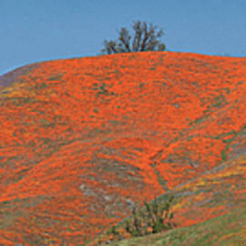 An Ocean Of Orange On The Mountain Top by Lynn Bauer