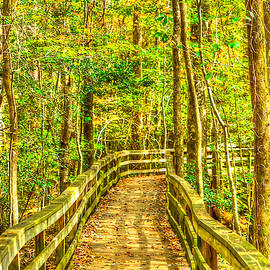 An Old Growth Bottomland Hardwood Forest by Don Mercer
