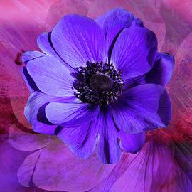 Terry Davis - Anemone in Purple