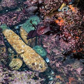 Marine Mosaic by Tran Boelsterli