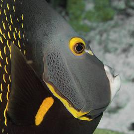Angel Fish Profile