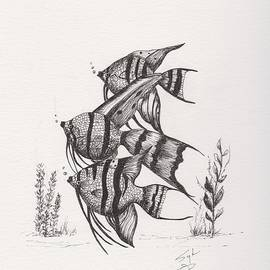 Angel Fish by Syl Lobato