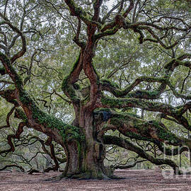 Angel Oak Tree of Life by Dale Powell