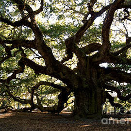 Angel Oak In November by Susanne Van Hulst