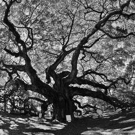 Angel Oak Johns Island Black And White by Lisa Wooten