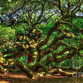 Angel Oak Morning Shadows Johns Island Landscape Charleston South Carolina Art by Reid Callaway