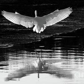 Angel Wings by Kris Hiemstra