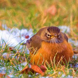Angry Bird by Sharon McConnell