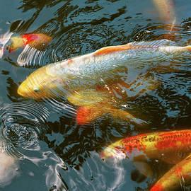 Mike Savad - Animal - Fish - Bestow good fortune