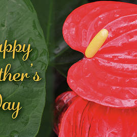 Antherium Mothers Day Card by Denise Bird