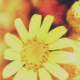 Jorgo Photography - Wall Art Gallery - Antique daisy field