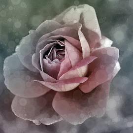 Antique Rose by Susan Maxwell Schmidt