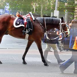 Miroslava Jurcik - Anzac Day March Memorial Horse Commemorate Boer War Veterans
