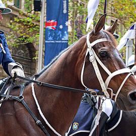 Miroslava Jurcik - Anzac Day March Police Horses