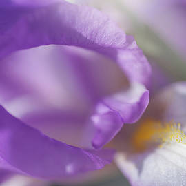 Jenny Rainbow - Aphrodite Macro 2. The Beauty of Irises
