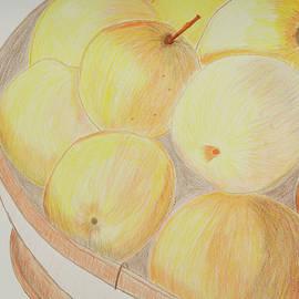 Cynthia Schoeppel - Apple Basket Colored Pencil Sketch