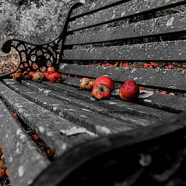 Apple Bench by John Gagnon
