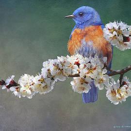 R christopher Vest - Apple Blossoms Bluebird