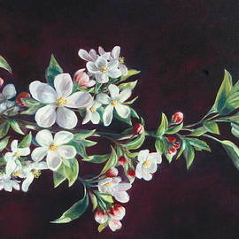 Apple Blossoms by Lynne Pittard