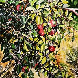 Apple Tree by Priti Lathia
