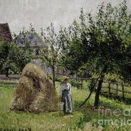 Apple Trees in Eragny, Sunny Morning, 1903  - Camille Pissarro