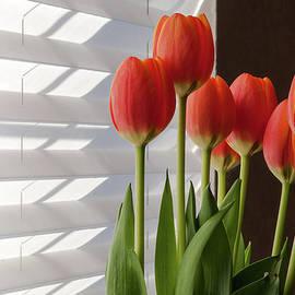 John Bartelt - April Flowers
